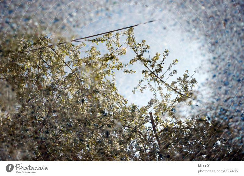 Spiegel Wasser Wetter schlechtes Wetter Regen Blüte Blühend Frühlingstag April Aprilwetter Kirschblüten Farbfoto Muster Menschenleer Morgen