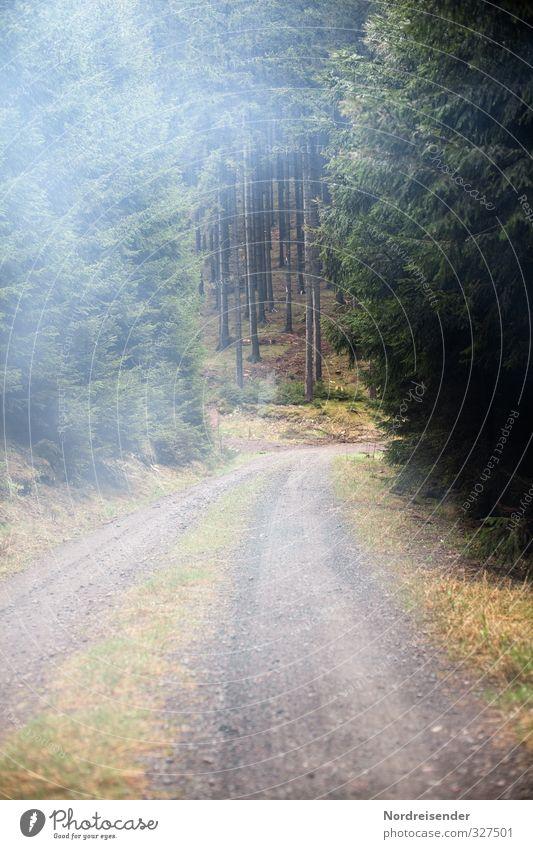 Fällt mir heute keiner ein.... Natur Pflanze Baum Einsamkeit Landschaft ruhig Erholung Wald Wege & Pfade Stimmung Wetter Klima Nebel wandern Tourismus Ausflug