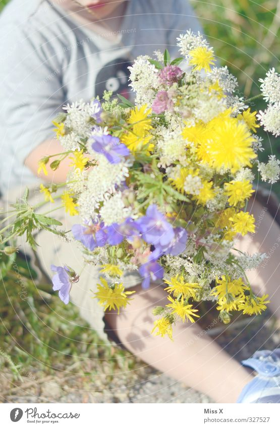 Blumenstrauß für Mama Mensch Kind Sommer Liebe Gefühle Frühling klein Blüte Stimmung Geburtstag Baby Lächeln niedlich Geschenk Blühend