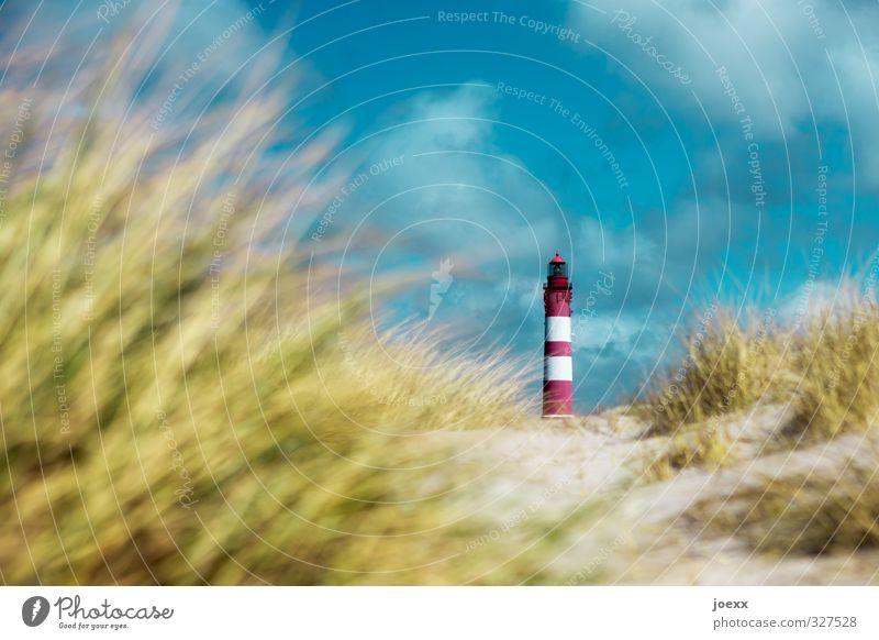 Fokus Natur Landschaft Schönes Wetter Hügel Küste Nordsee Dünengras Leuchtturm alt ruhig Fürsorge Idylle Farbfoto mehrfarbig Außenaufnahme Menschenleer Tag