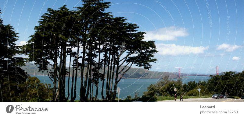 Golden Gate 1 Mensch Himmel Baum Wolken groß Brücke USA Aussicht Amerika Bucht San Francisco Golden Gate Bridge San Francisco Bay