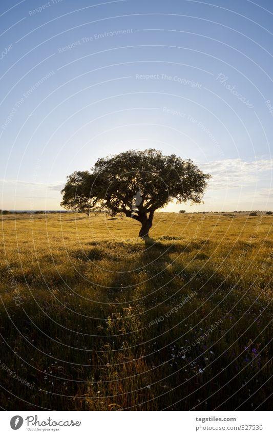 LAST MAN STANDING Natur Ferien & Urlaub & Reisen Pflanze Baum Blume Landschaft Erholung Blüte Reisefotografie Idylle Tourismus Blühend Postkarte Paradies himmlisch Portugal