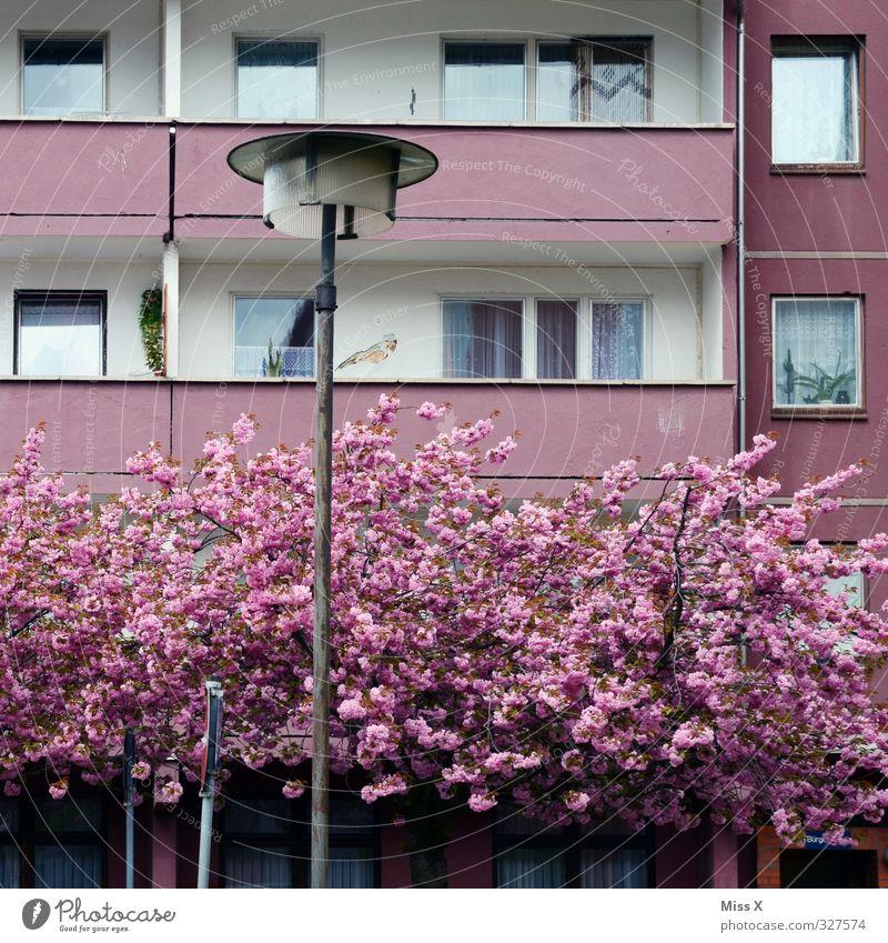 Hartz-Barbies Wohntraum Häusliches Leben Wohnung Haus Traumhaus Frühling Baum Blüte Hochhaus Balkon alt Kitsch rosa Armut Wohnungssituation Plattenbau Farbfoto