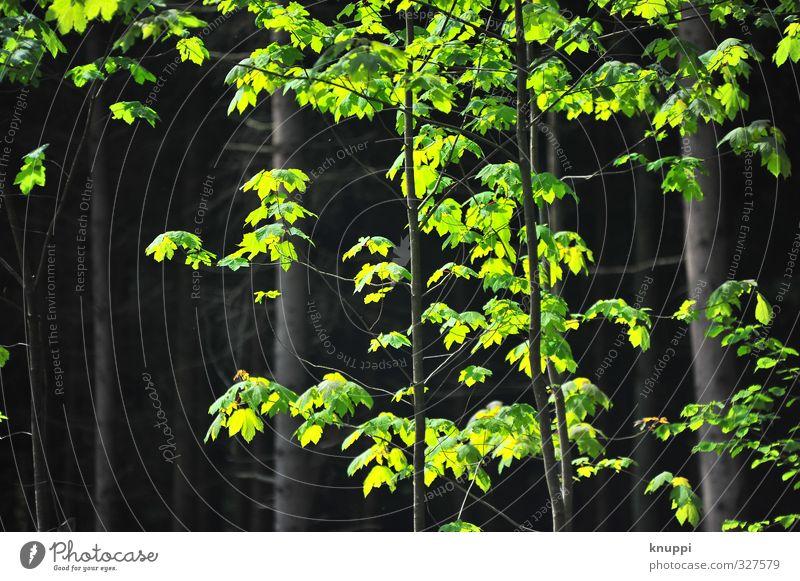 green Umwelt Natur Landschaft Sonne Sonnenlicht Frühling Sommer Schönes Wetter Pflanze Baum Sträucher Wildpflanze Wald dunkel frisch hell natürlich schön wild