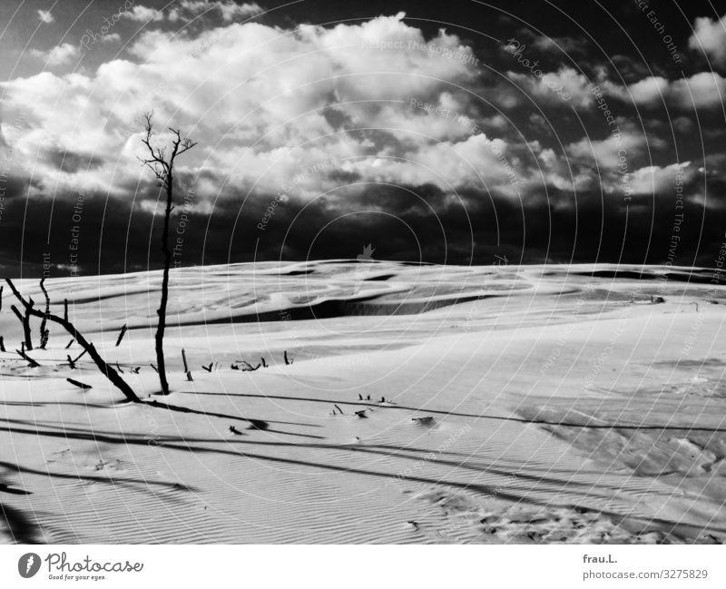Tote Bäume Ferien & Urlaub & Reisen schön Landschaft Winter Strand Küste Tourismus Ausflug Ostsee Düne Naturschutzgebiet Polen