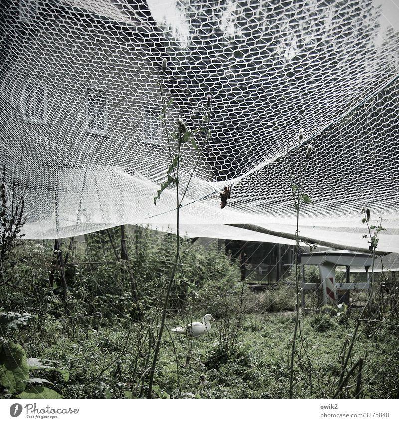 Gans n' Roses Pflanze Baum Gras Sträucher Gehege Dorf Haus Nutztier 1 Tier Kunststoff ruhig beweglich Idylle Kontrolle Schutz Zufriedenheit Netz gespannt