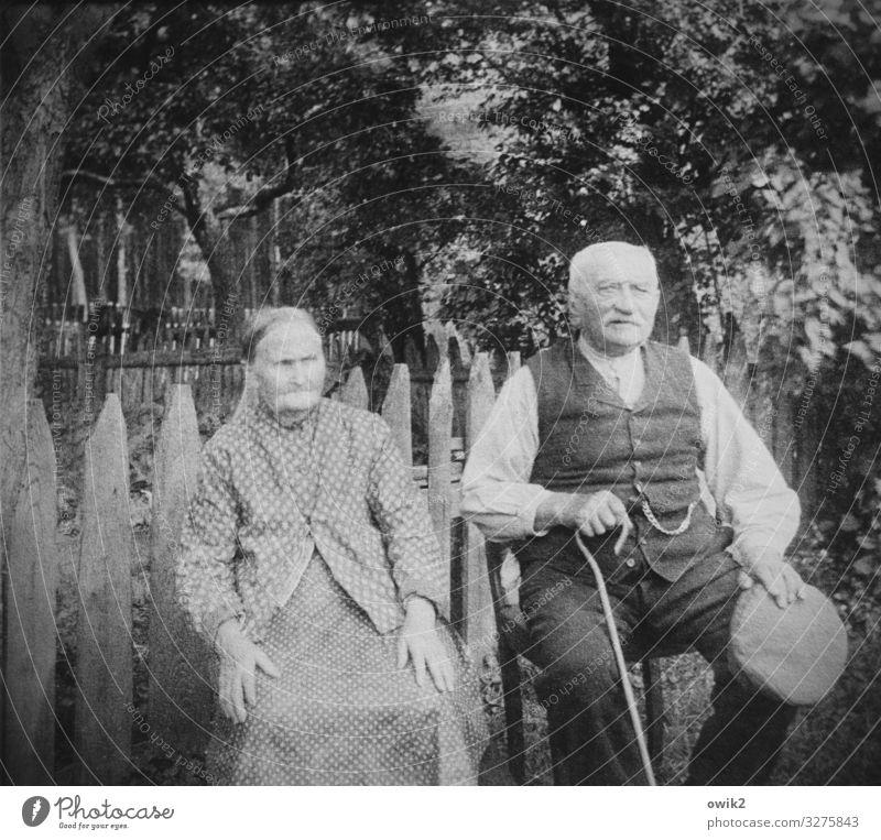 Vorruhestand Frau Mensch Mann alt Baum ruhig Senior Familie & Verwandtschaft Paar Garten Zusammensein Freundschaft Zufriedenheit sitzen beobachten Vergangenheit
