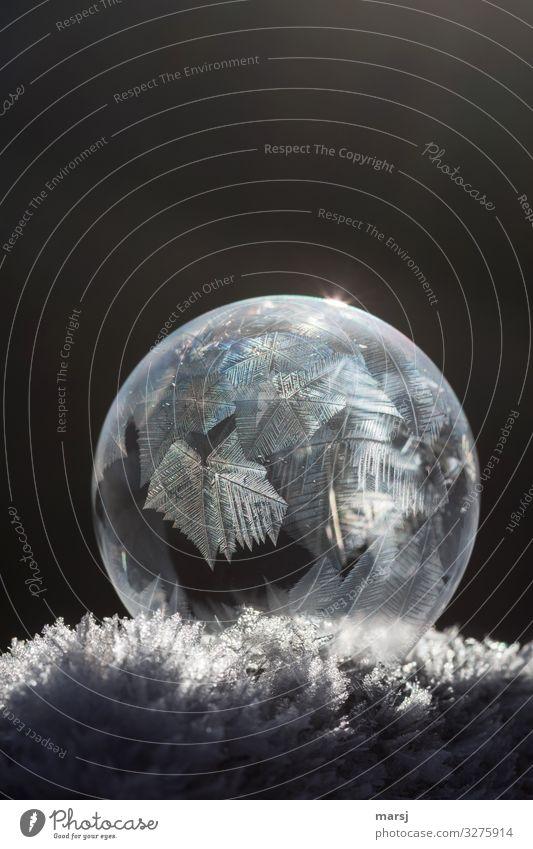 Kristall auf Kristall Leben harmonisch ruhig Winter Eis Frost Schnee Eiskristall Kristalle außergewöhnlich dunkel dünn authentisch elegant fantastisch