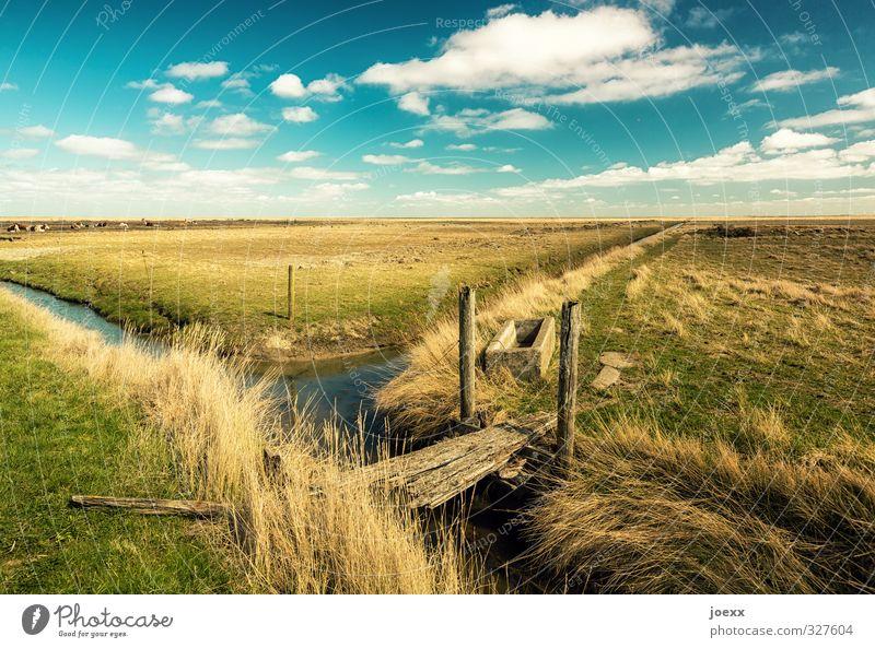 Hooge Natur Landschaft Wasser Himmel Wolken Horizont Schönes Wetter Wiese Feld Insel Hallig Hooge Halligen Kuh Tiergruppe Unendlichkeit schön blau braun gelb