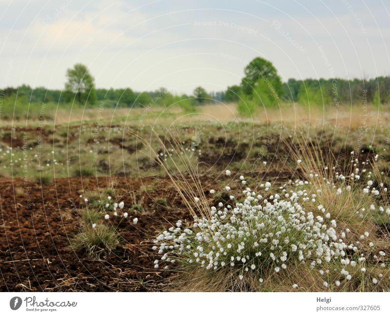 Helgiland | Frühling im Moor Himmel Natur blau grün weiß Pflanze Baum Einsamkeit Landschaft ruhig Wolken Umwelt Gras Frühling Blüte natürlich