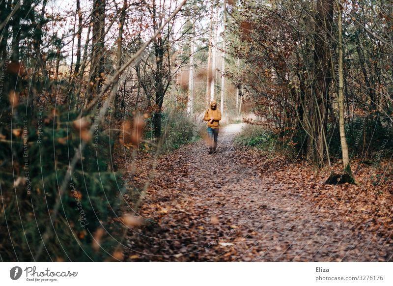 Ein Mann spaziert auf einem herbstlichen Waldweg spazieren Spaziergang Herbst Natur wandern Landschaft Wege & Pfade Ausflug Erholung Bäume Laub Herbstlaub