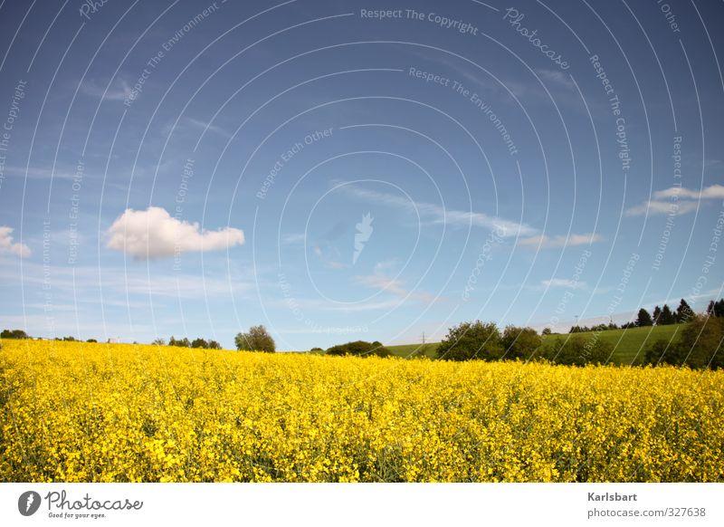 V Himmel Natur Ferien & Urlaub & Reisen Pflanze Sommer Wolken Umwelt Ferne Wiese Frühling Freiheit Gesunde Ernährung Gesundheit Feld Gesundheitswesen