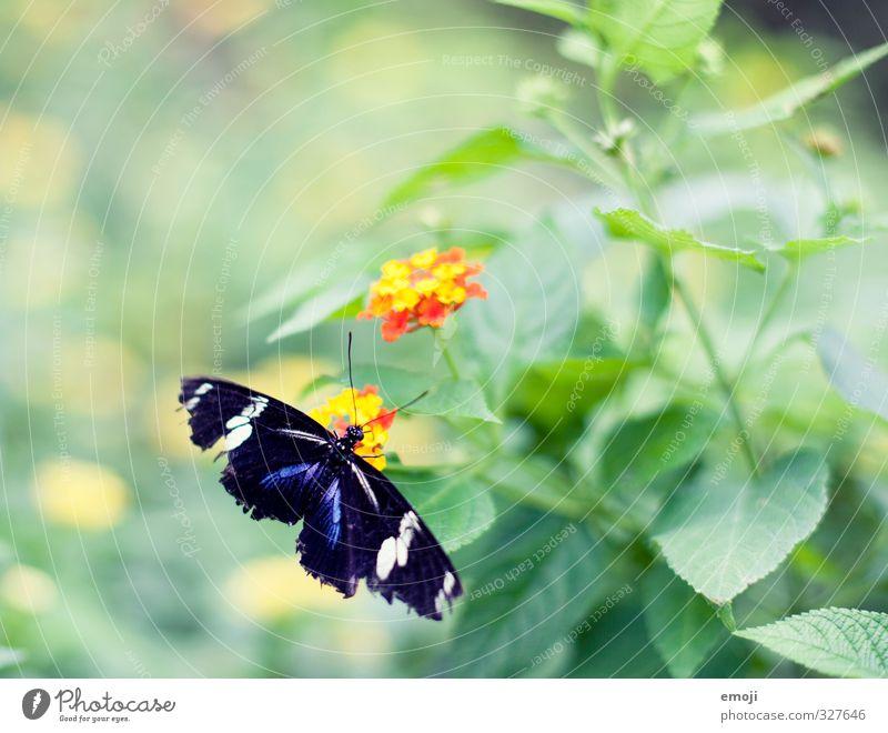 ausgefranst Umwelt Natur Pflanze Tier Frühling Blume Grünpflanze Wildtier Schmetterling 1 natürlich grün Farbfoto Außenaufnahme Makroaufnahme Menschenleer Tag