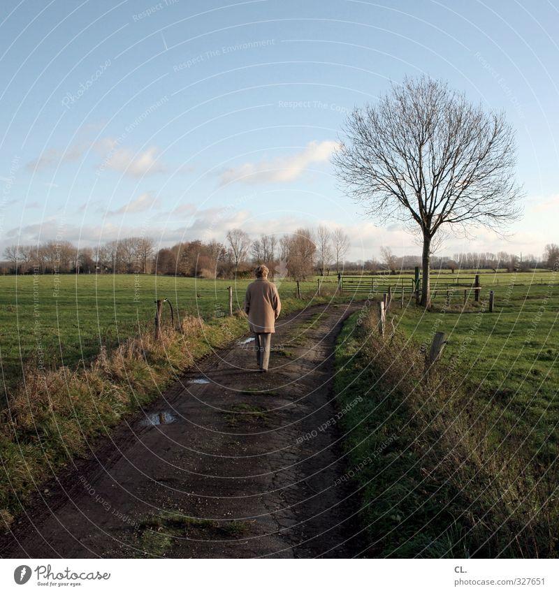 weg Mensch feminin Frau Erwachsene Weiblicher Senior 1 Natur Landschaft Himmel Herbst Schönes Wetter Baum Wiese Feld alt gehen ruhig Traurigkeit Sorge Trauer