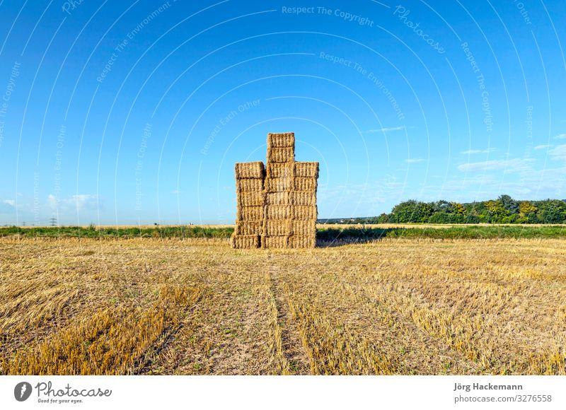 Heuballen auf einem Feld nach der frischen Ernte unter blauem Himmel Sommer Sonne Industrie Natur Landschaft Herbst Wiese natürlich braun gelb gold Lebensmittel