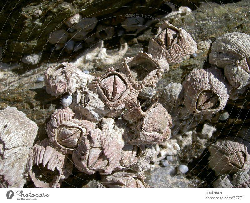 muschelnaustralia Muschel Australien Strand
