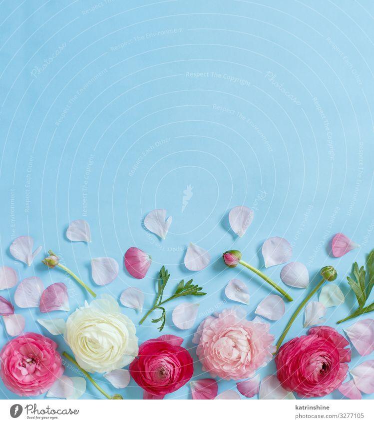 Rosa Blumen auf hellblauem Hintergrund Design Dekoration & Verzierung Hochzeit Frau Erwachsene Mutter Rose oben rosa Kreativität romantisch hell-blau