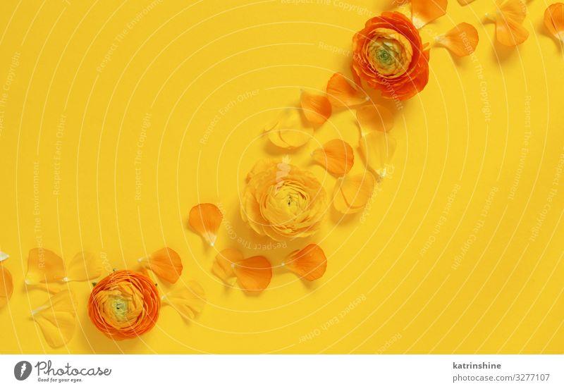 Gelbe Blumen und Blütenblätter auf gelbem Hintergrund Design Dekoration & Verzierung Hochzeit Frau Erwachsene Mutter Rose hell Kreativität romantisch orange