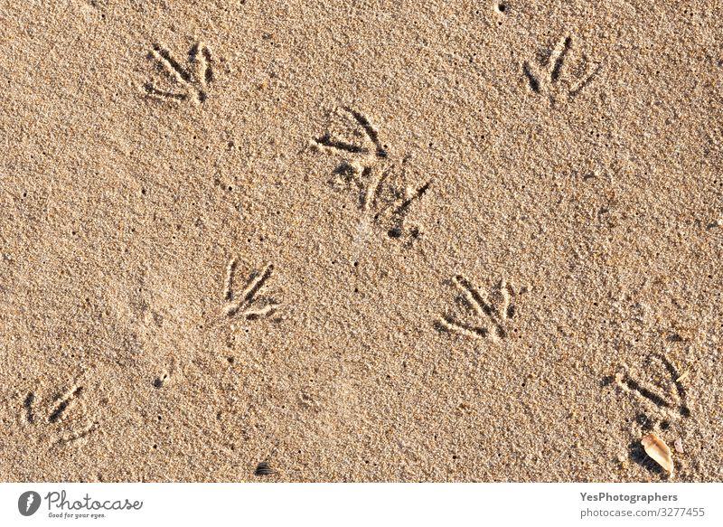 Vogelfußabdrücke auf Sand an einem sonnigen Tag. Strandtag und Vogelspuren Ferien & Urlaub & Reisen Sommer Sommerurlaub Klimawandel Schönes Wetter Nordsee