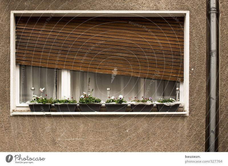 schieflage. Häusliches Leben Wohnung Haus Renovieren Dekoration & Verzierung Pflanze Blume Blüte Topfpflanze Gebäude Mauer Wand Fassade Fenster Rollo Rollladen