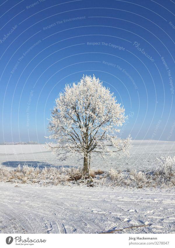 Baum in Raureif Winter Schnee Landschaft Himmel Wetter blau weiß kalt Frankenhausen Eis schlecht Feld Frost Deutschland ländlich Jahreszeiten