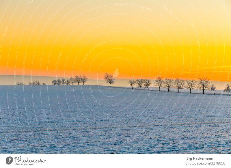 Winterlandschaft mit Baumallee im Sonnenuntergang harmonisch Schnee Landschaft Himmel Horizont Wetter weich blau weiß Gefühle Einsamkeit Bad Frankenhausen kalt