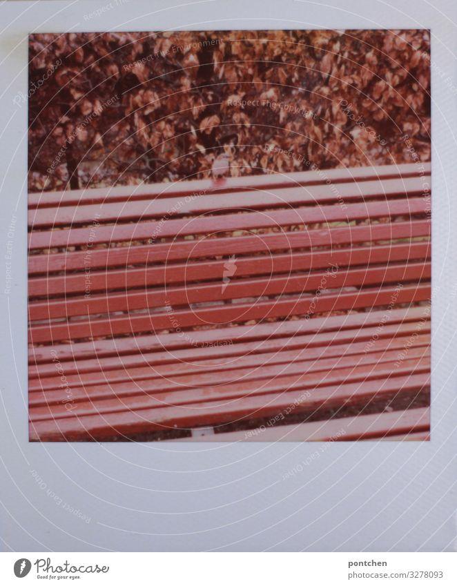 Besetzt rot Tier Einsamkeit Blatt ruhig Herbst klein Vogel Wildtier sitzen einzeln Bank winzig Holzbank