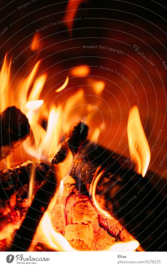 Nahaufnahme eines brennenden Feuers mit Flammen heiß Feuerstelle Kaminfeuer Holz rot gelb Wärme Farbfoto Innenaufnahme Menschenleer Textfreiraum oben