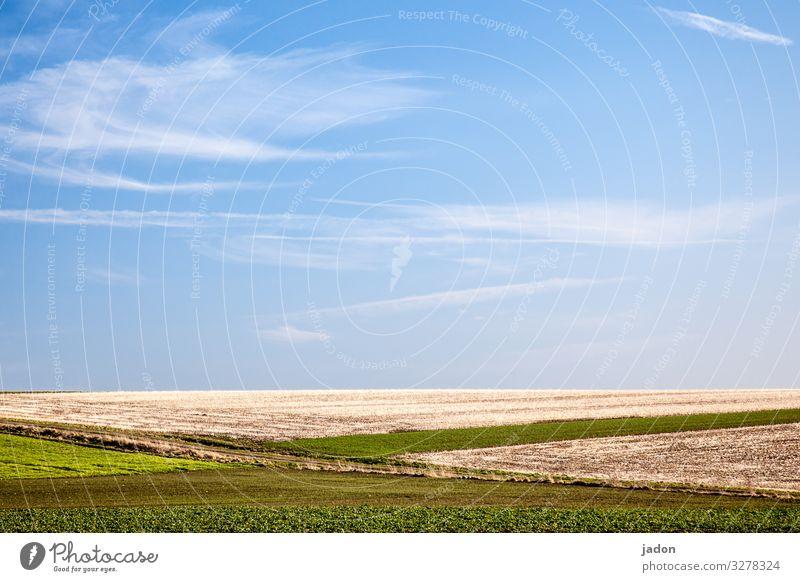felder und blauer himmel. Feld Himmel Frühling grün Gras Landschaft Wolken Menschenleer Schönes Wetter Tag Umwelt Pflanze Wiese Textfreiraum oben Horizont Natur