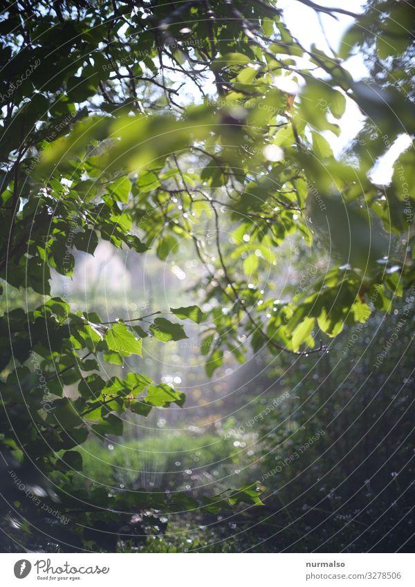 Sommerregen Lifestyle Häusliches Leben Wohnung Traumhaus Garten Natur Landschaft Pflanze Tier Urelemente Wassertropfen Sonne Klima Klimawandel Schönes Wetter