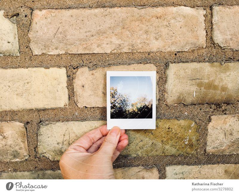Polaroid Umwelt Natur Frühling Sommer Herbst Winter Baum Wald Bauwerk Mauer Wand Fassade Stein braun gelb grün schwarz türkis weiß Backstein Hand Himmel