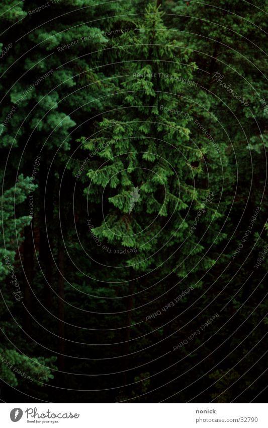 Waid-Wipfel Natur grün Wald Tanne Baumkrone