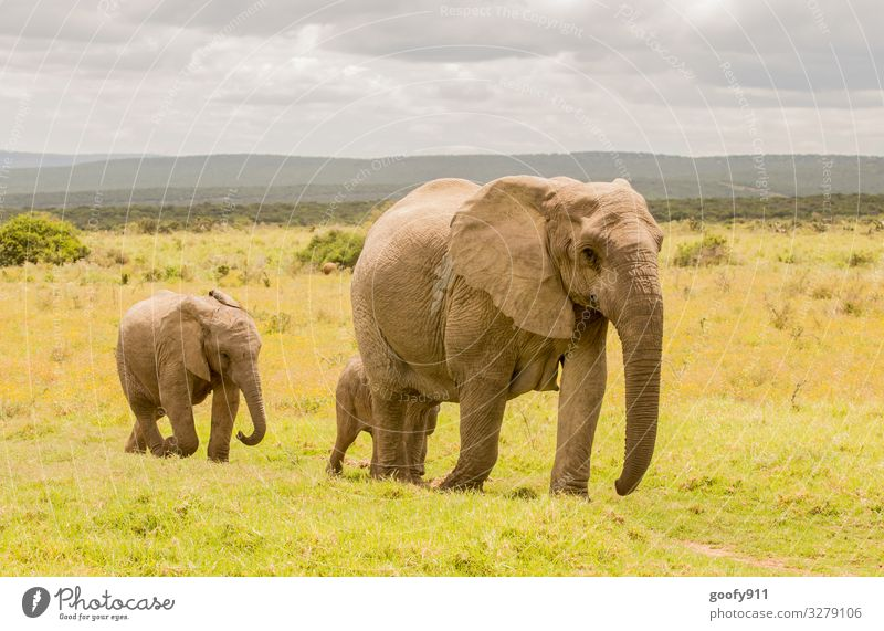 Familienausflug Ferien & Urlaub & Reisen Tourismus Ausflug Abenteuer Ferne Freiheit Safari Expedition Umwelt Natur Landschaft Himmel Wolken Gras Tier Wildtier