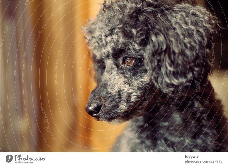 Warten auf Frauchen Hund Einsamkeit ruhig Tier schwarz Traurigkeit Autofenster Denken Stimmung orange Raum warten Neugier Sehnsucht tief Tiergesicht