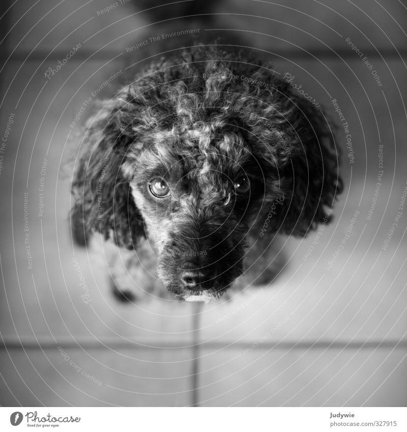 Bloß nicht um den kleinen Finger wickeln lassen... Hund Tier Haus Spielen Freundschaft Wohnung Freizeit & Hobby warten Häusliches Leben niedlich beobachten