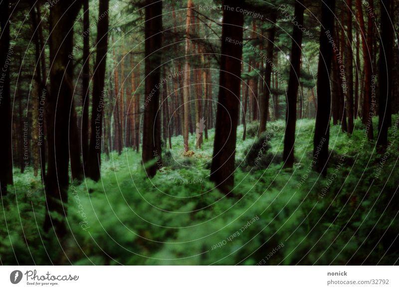 Waid-Blick Natur Baum Wald Lichtspiel Echte Farne