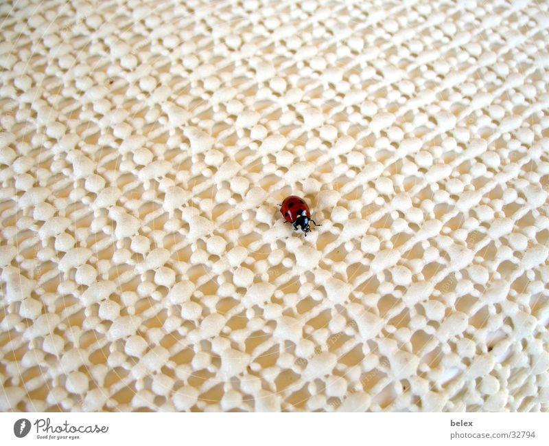 einsamer Marienkäfer Insekt Tier rot weiß Einsamkeit Suche Muster krabbeln Käfer fliegen Strukturen & Formen Fleck Punkt Tischwäsche