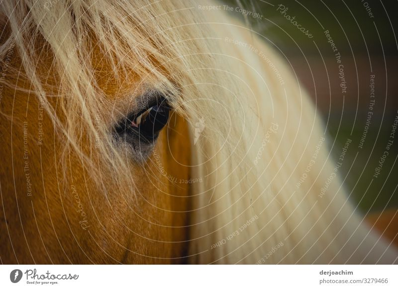 Schau mir in die Augen Freude harmonisch Ausflug Bayern Deutschland Menschenleer Pferd 1 Tier beobachten entdecken Blick leuchten fantastisch einzigartig schön
