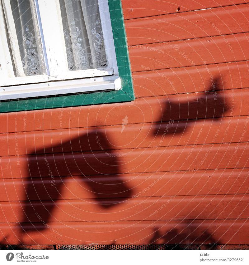 Schatten von Wäsche auf Leine in Sommersonne... Sonnenlicht Licht Außenaufnahme Menschenleer Tag Kontrast Totale Silhouette Strukturen & Formen Fenster Fassade
