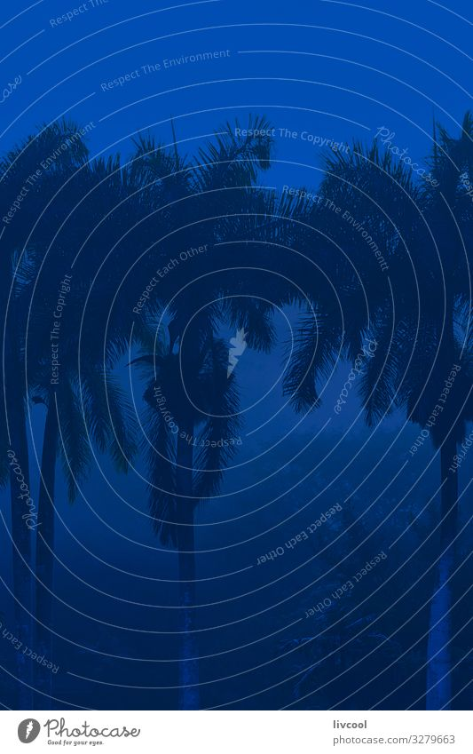palmen im nebel 3 , kuba Lifestyle Leben Ferien & Urlaub & Reisen Tourismus Ausflug Insel Natur Landschaft Pflanze Klima Wetter Nebel Baum Blatt genießen