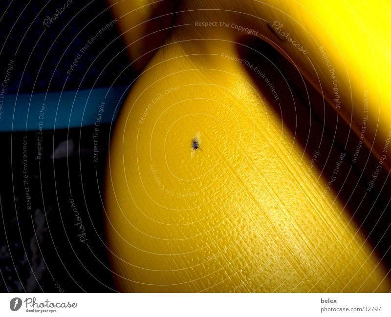 Fliegen-Gießkanne blau schwarz Tier gelb Garten Insekt gießen