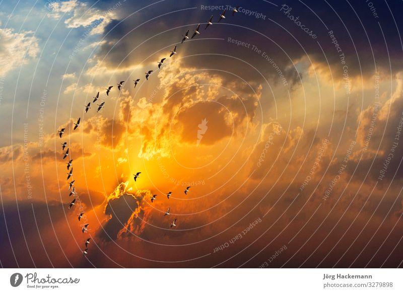 spektakulärer goldener Sonnenuntergang mit Wolken Ferien & Urlaub & Reisen Freiheit Natur Landschaft Himmel Horizont Wetter Wärme Hügel träumen dunkel frei hell