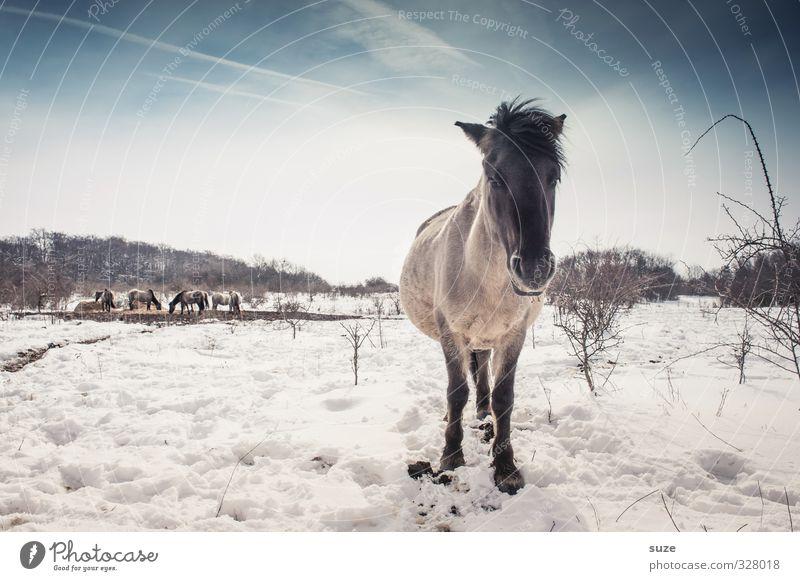 Schwarz geärgert Himmel Natur blau weiß Tier Winter Umwelt kalt Schnee Horizont wild Wildtier authentisch stehen niedlich Pferd
