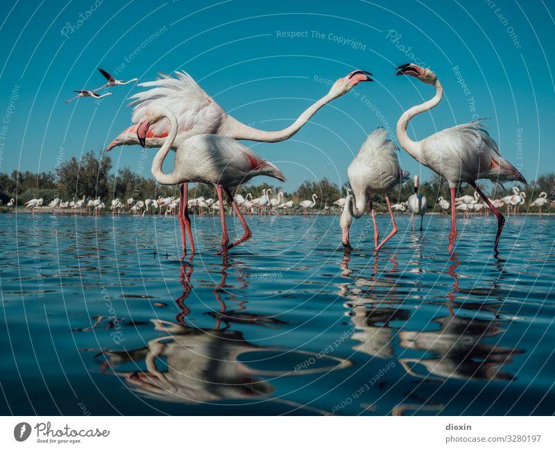 Flamingo Lagoon Ferien & Urlaub & Reisen Tourismus Abenteuer Umwelt Natur Landschaft Tier Wasser Himmel Wolkenloser Himmel Sonnenlicht Schönes Wetter Küste Meer