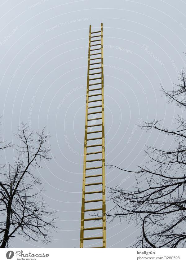 Himmelsleiter Winter Pflanze Baum Leiter glänzend hoch blau braun gold goldene Leiter Farbfoto Außenaufnahme Menschenleer Textfreiraum links Textfreiraum rechts