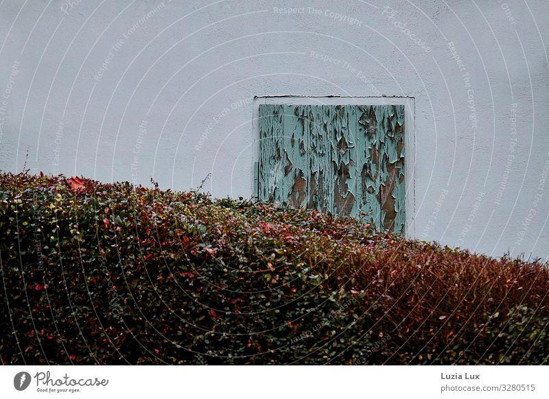 Stilleben, Herbst weiß Fenster Wand Garten Mauer Fassade türkis Fensterladen Hecke
