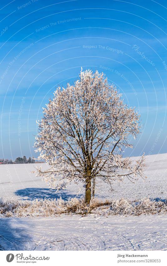 weiße, eisige Bäume in schneebedeckter Landschaft harmonisch Winter Schnee Himmel Wetter Baum alt blau Gefühle Einsamkeit Bad Frankenhausen kalt Eis Feld Frost