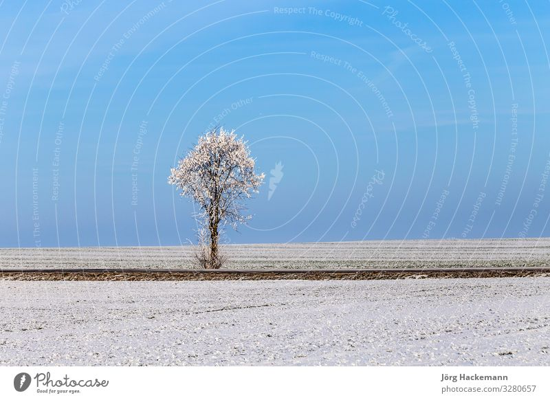 weiße, eisige Bäume in schneebedeckter Landschaft harmonisch Winter Schnee Himmel Wetter Baum Straße alt blau Gefühle Einsamkeit Bad Frankenhausen kalt Eis Feld