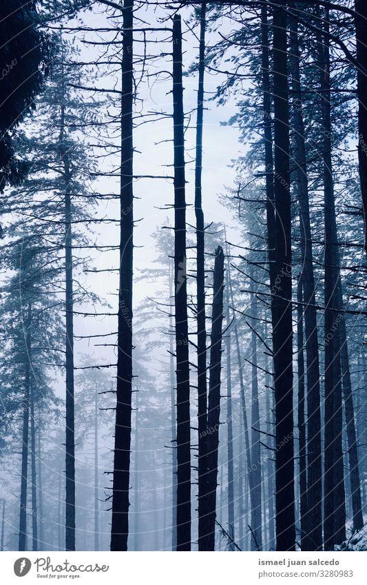 Schnee auf den Bäumen im Wald in der Wintersaison Baum Schneefall weiß kalt Frost Eis Szene Wetter gefroren Berge u. Gebirge Natur Landschaft Außenaufnahme