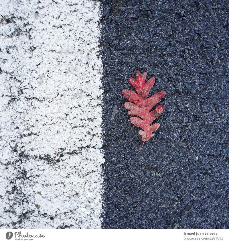 Natur weiß rot Einsamkeit Blatt Straße Hintergrundbild Herbst natürlich Linie Boden Jahreszeiten Asphalt Isoliert (Position) Konsistenz zerbrechlich